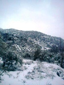 Αΐμονας Μυλοποτάμου Χιόνια δένδρα